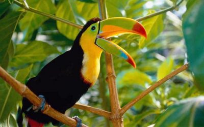 The Top 7 Costa Rica Birding Spots