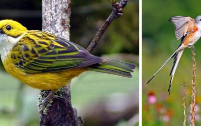 Birding and Beaches: Costa Rica Birdwatching Tour