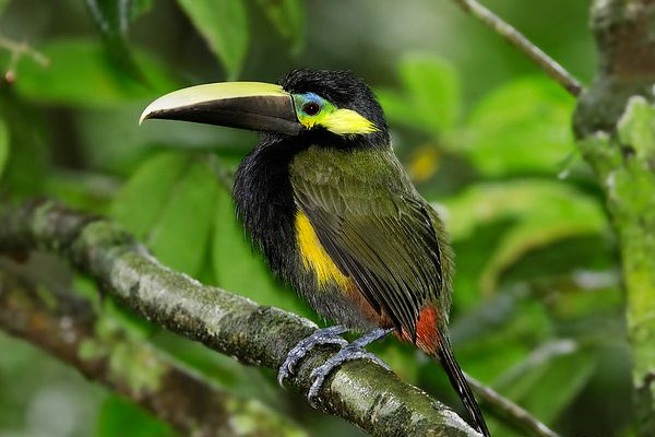Secluded Costa Rica Birdwatching Tours