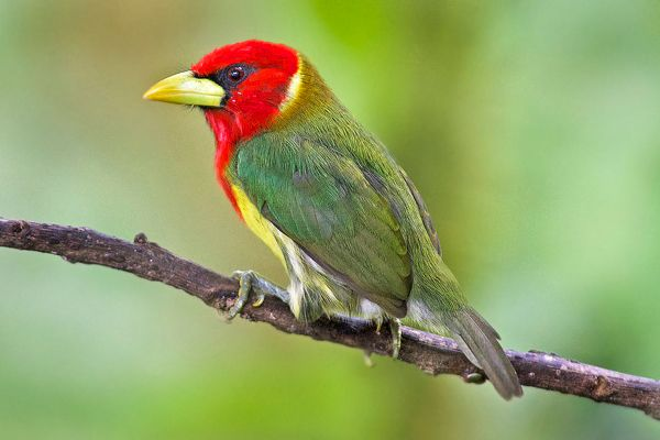 Costa Rica Biological Stations Birding Tour