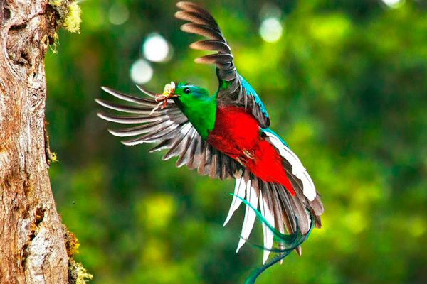Costa Rica Bird Watching Tours 1