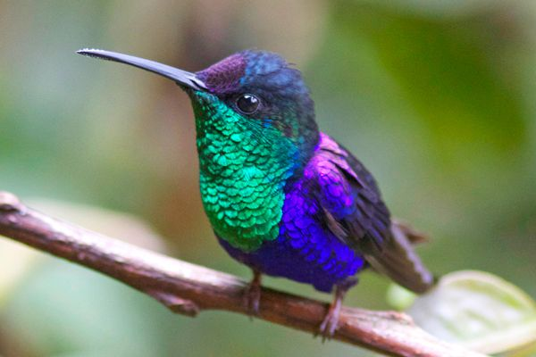 Costa Rica Birdwatching Tours 2019