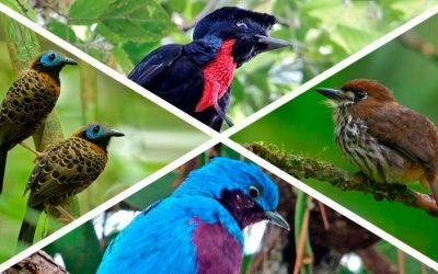 Search for the Elusive Birds of Costa Rica