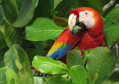macaw-lodge4