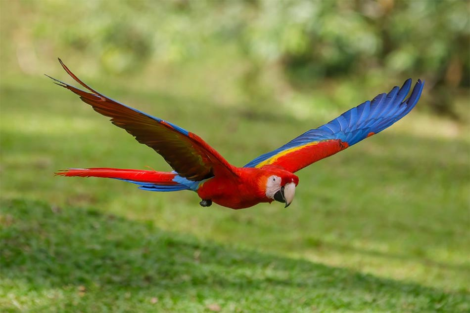 Birding Central Pacific Costa Rica – A Complete Guide