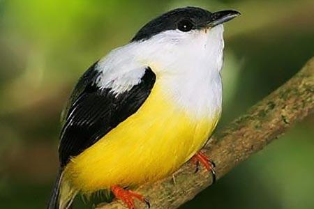 Group Birding Trip - Elusive Birds of Costa Rica